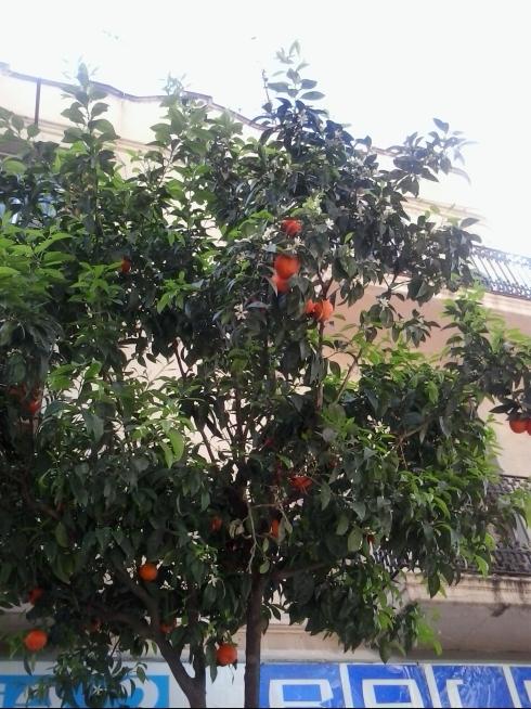 naranjas y flores. jpg